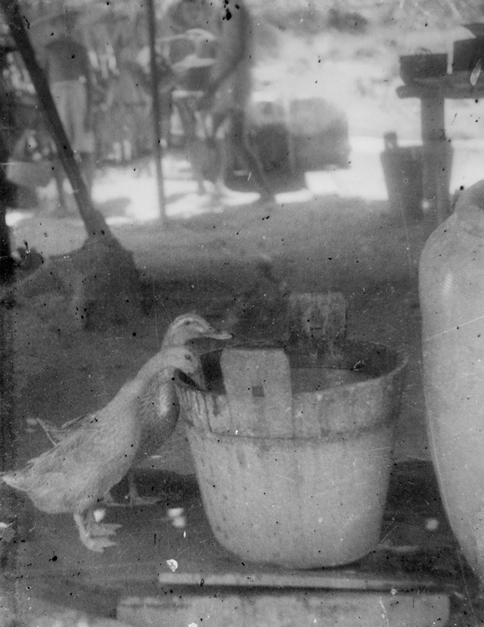 Ducks at Bahau (Japanese propaganda photograph)