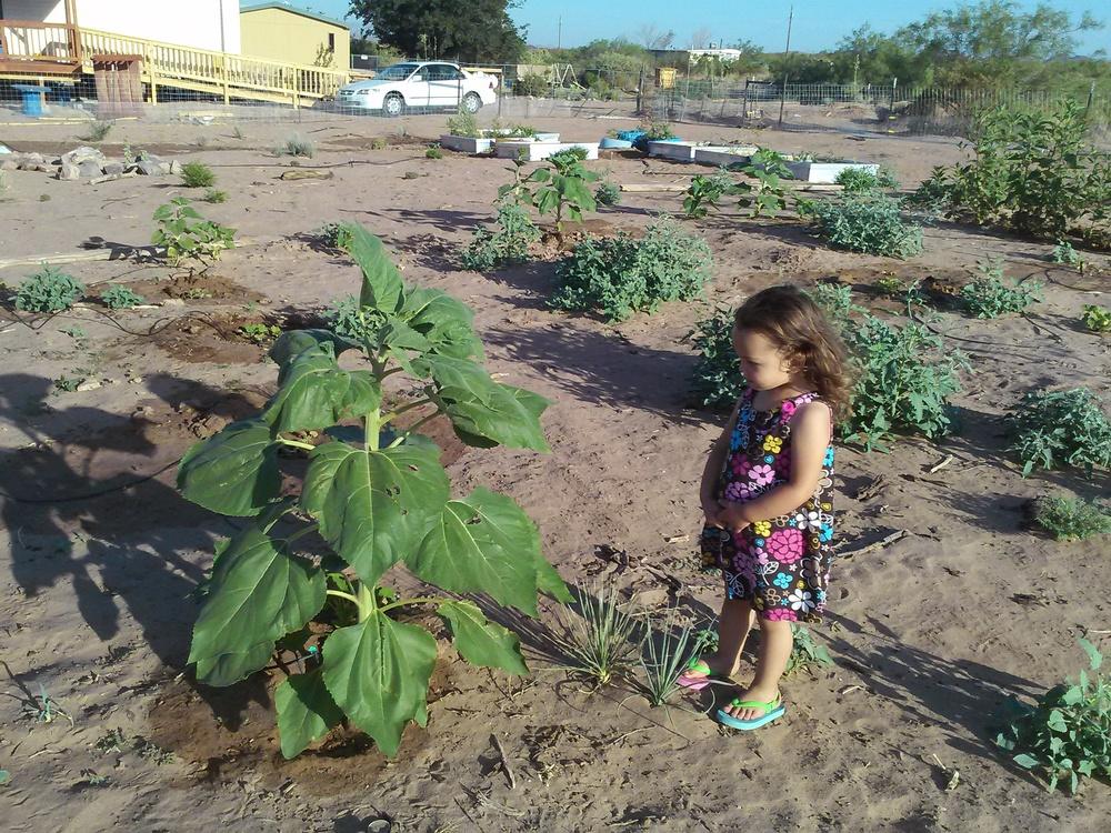 Tour the Better Future Farm