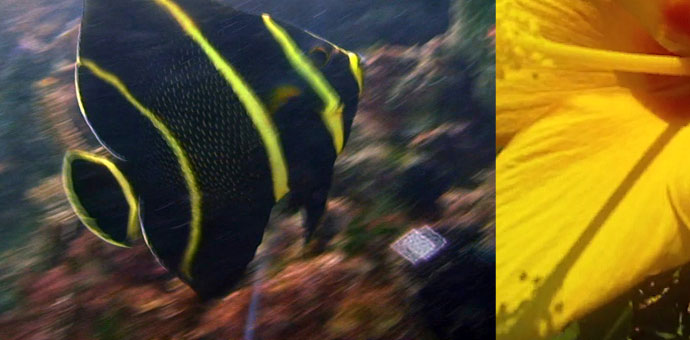fish_flower.png