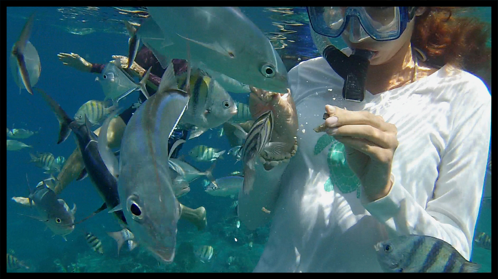fish_feed.jpg