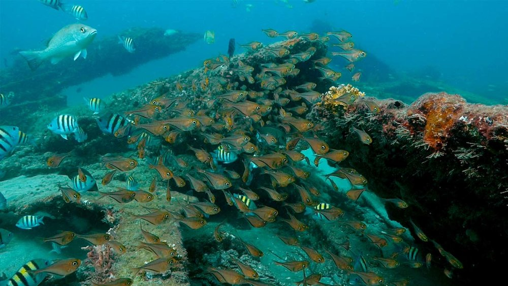 The Wreck of the    Lofthus  -   Manalapan, FL