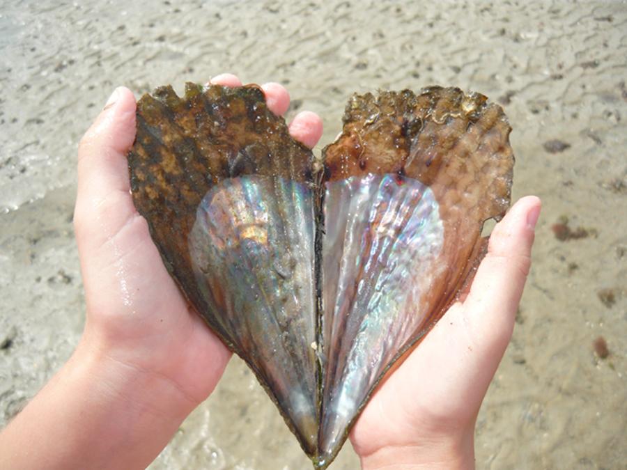 heart_shell copy.jpg
