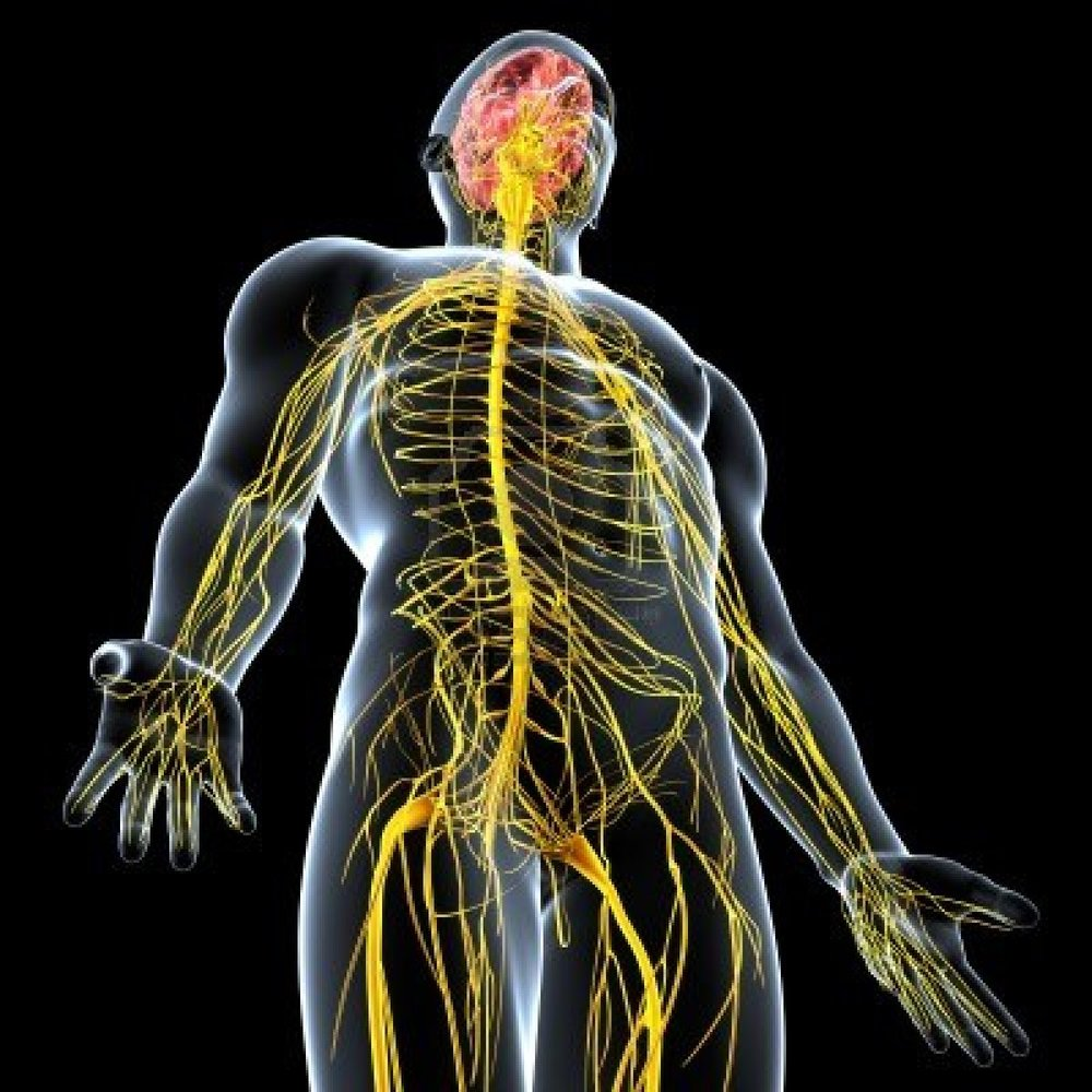 Training Is All About The Nervous System Ohfast