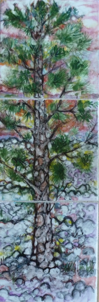 Lava Cast Forest Ponderosa - 6x18.jpg