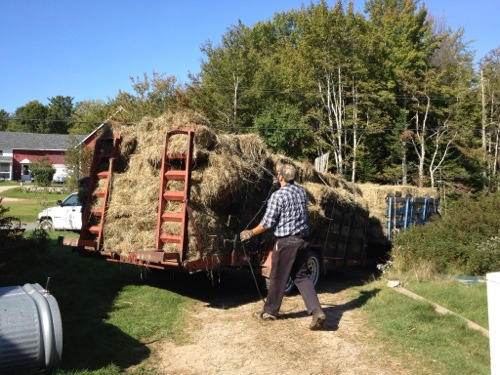 Hay Wagon stacked with hay bales