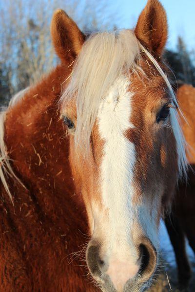 Happy horses, too.