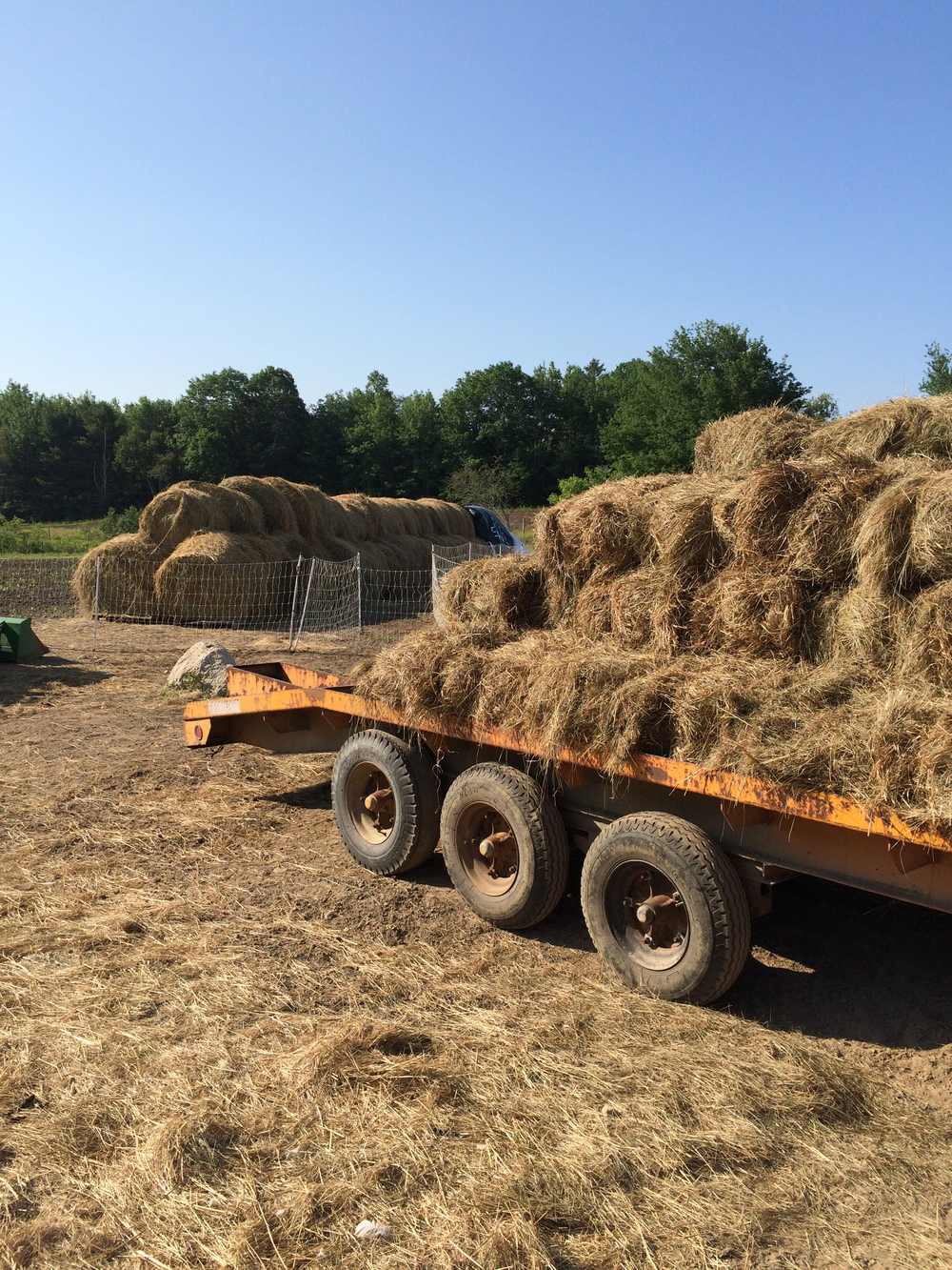 Blog — Dovetail Family Farm