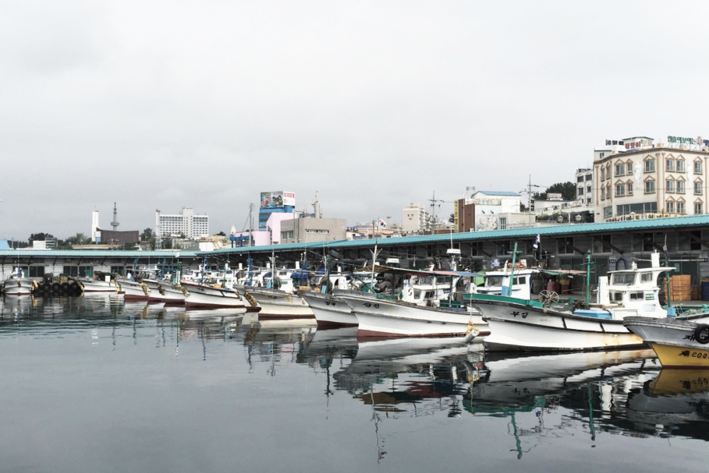 Marina full of fishing vessels in Sokcho, South Korea.