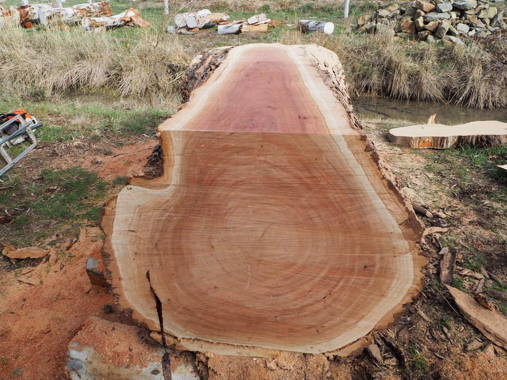 Red Gum2 copy.jpg