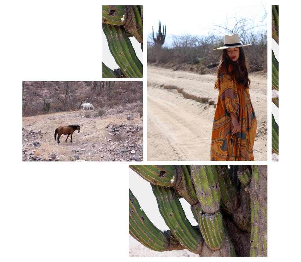 Cactus Snakes 1.jpg