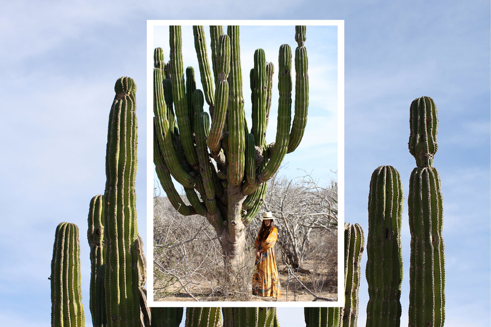 Cactus Snakes 3.5.jpg
