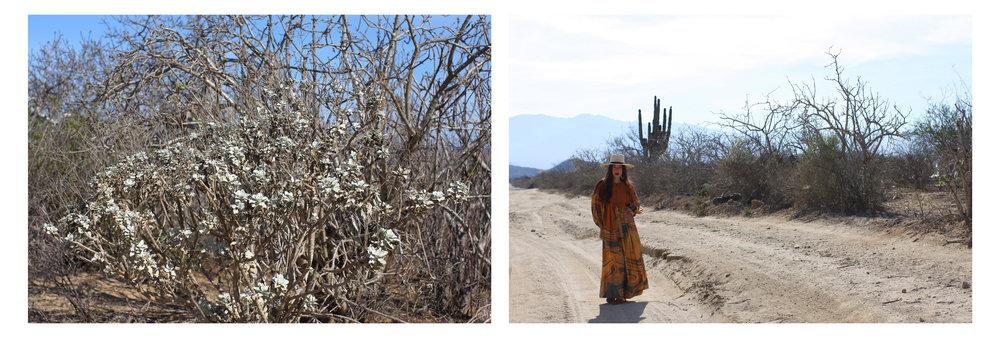 Cactus Snakes 6.jpg