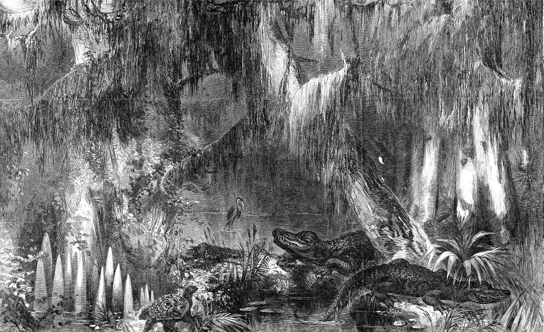A.R. Waud, Cyprus swamp on the Opelousas Railroad, Louisiana