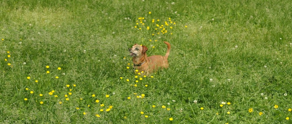 After we work together, you will feel as happy as a puppy running through tall grass on a sunny day.  -Jen RB
