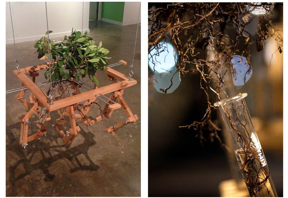 Plant Extension  2013