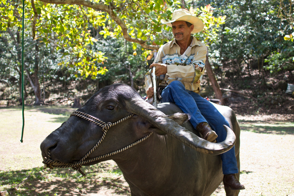 Didimo, a former rodeo star, has over 50 animals that he either rescues when they are harmed in the wild, or domesticates. on his farm near Caldera, Panama.