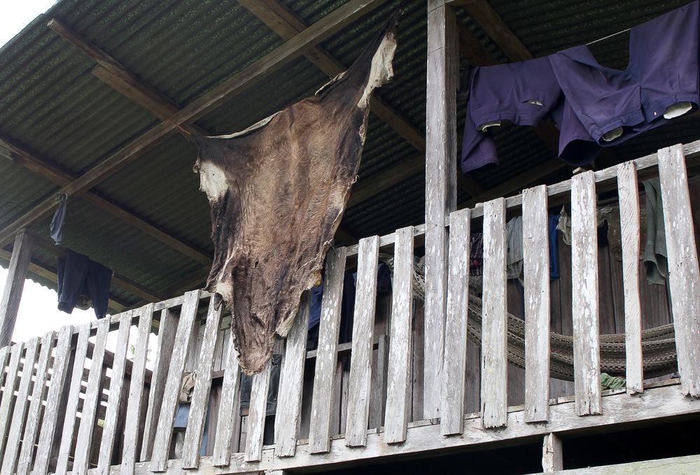 D5-Cow-Hide-2000.jpg