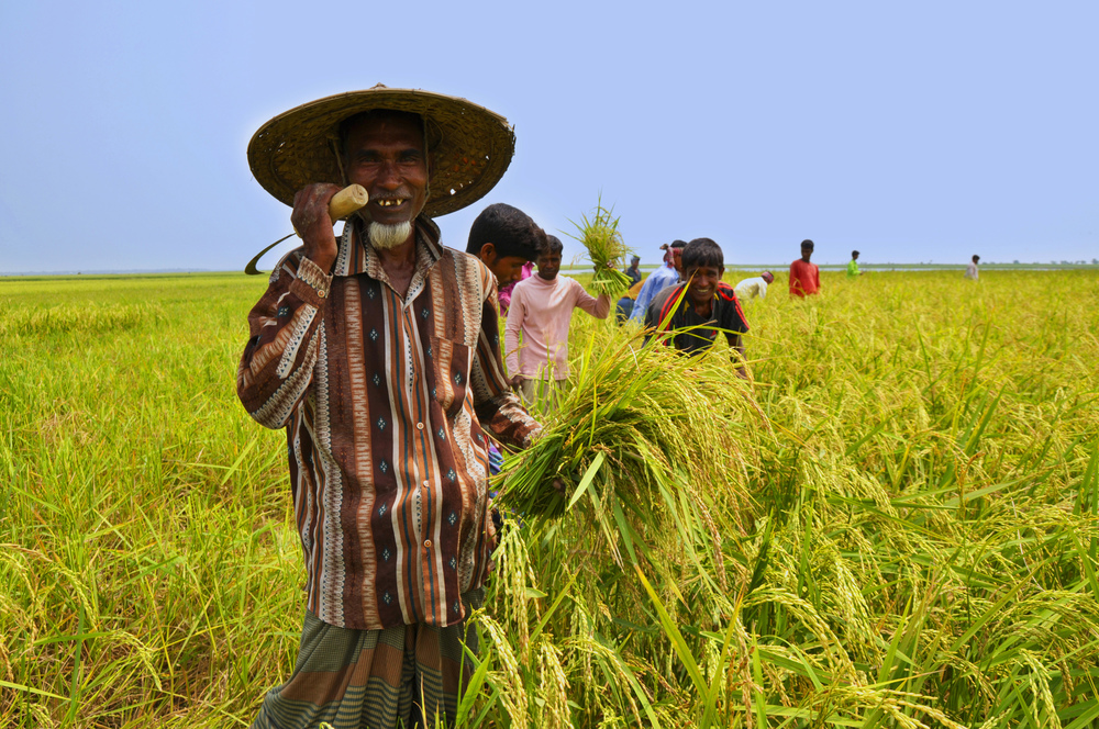 Farmer in Bangladesh