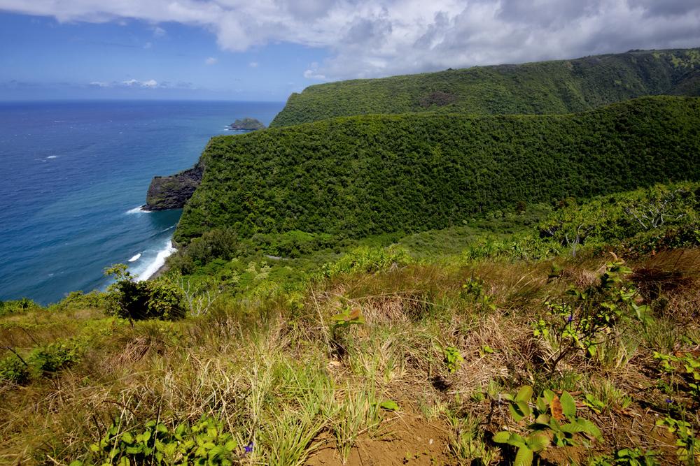 Honokae Nui Overview