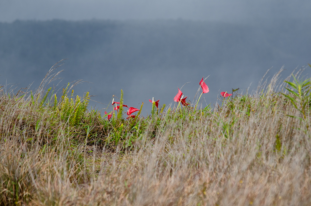 FLOWERS ON CRATER.jpg