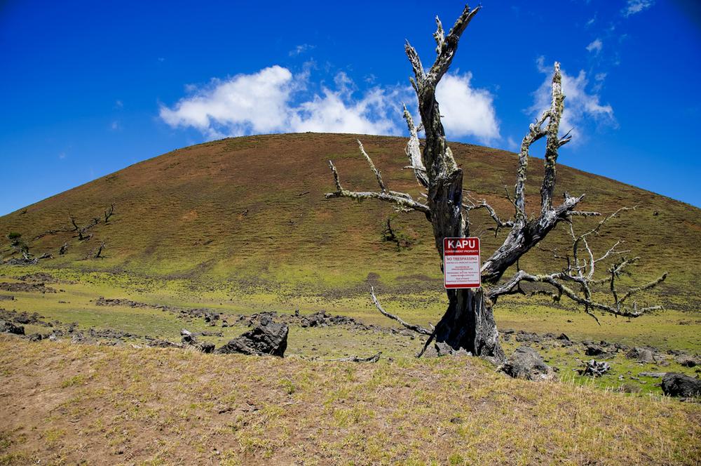 KAPU TREE.jpg