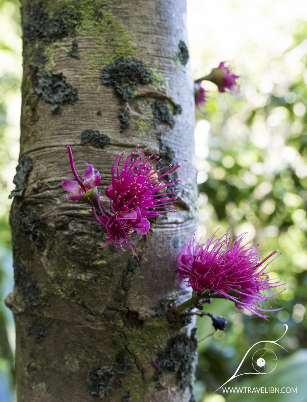 tree flower.jpg