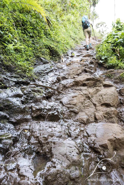 trail.jpg