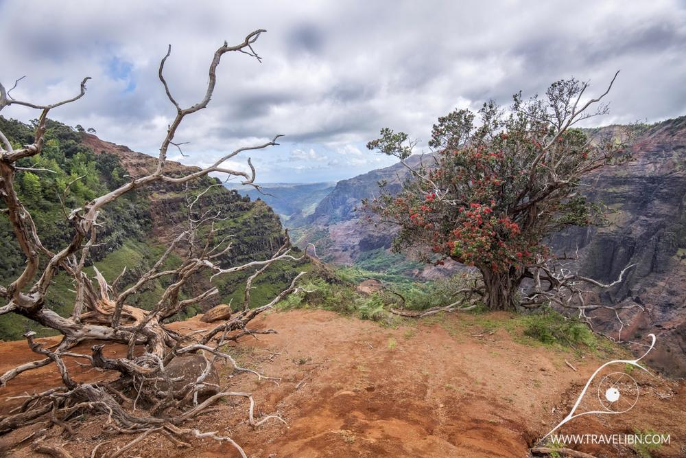 waimea canyon cliff trail.jpg