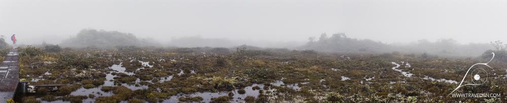 Alakai Swamp