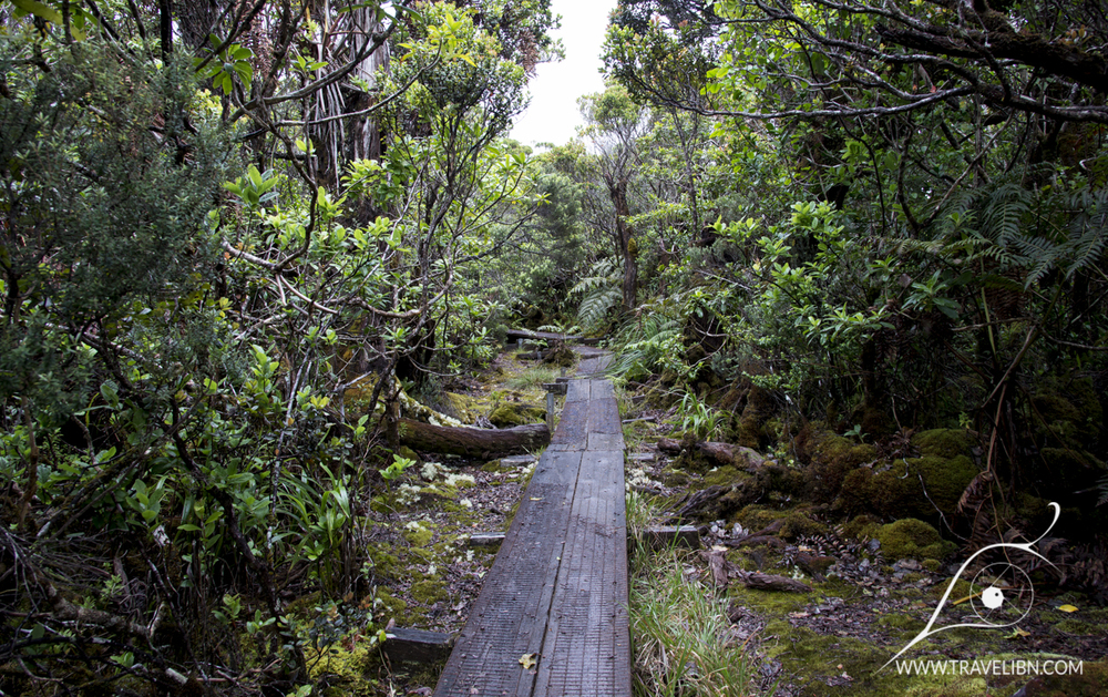 Alaka'i Swamp Trail Boardwalk