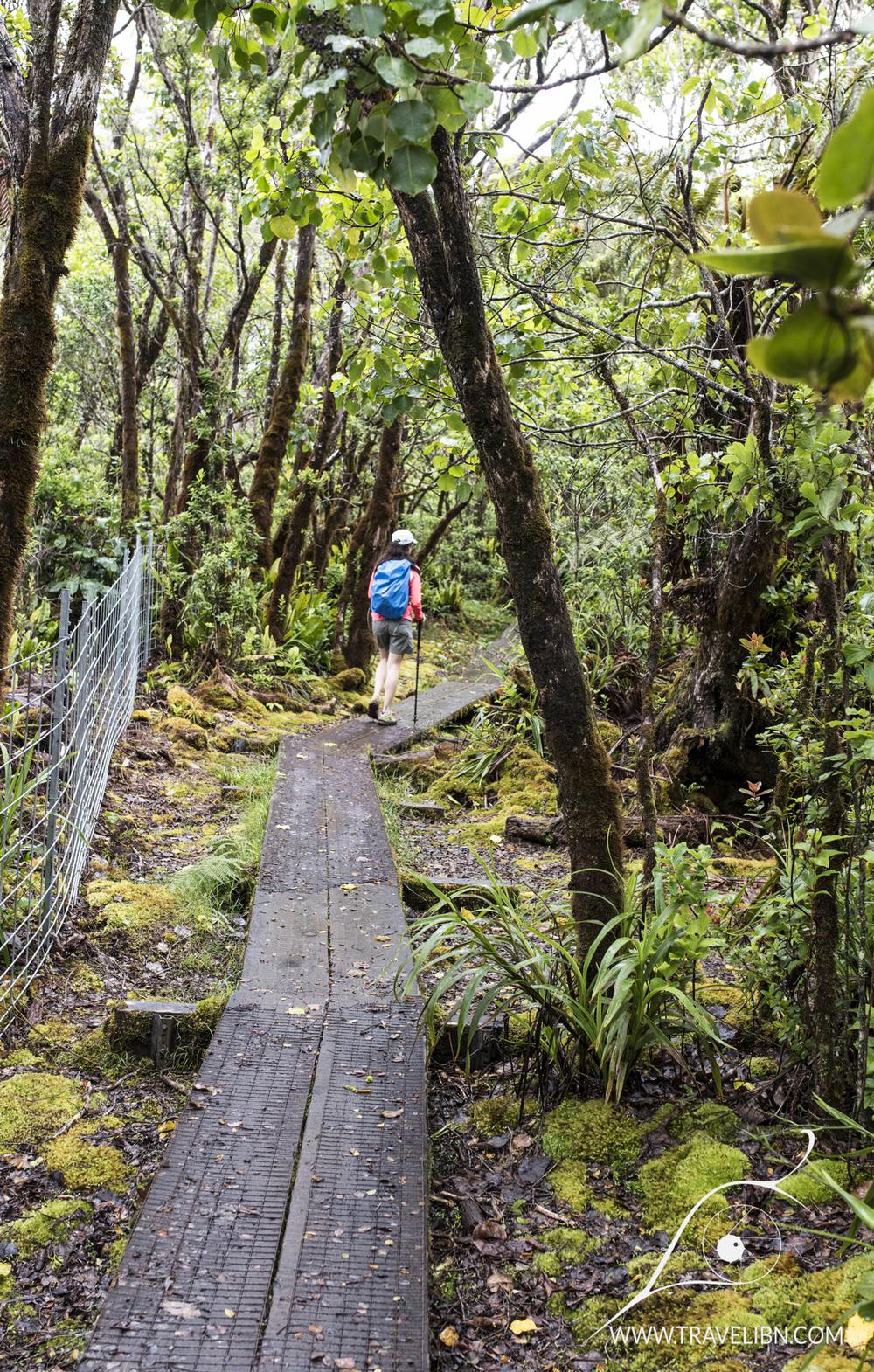 Boardwalk on Alaka'i Swamp
