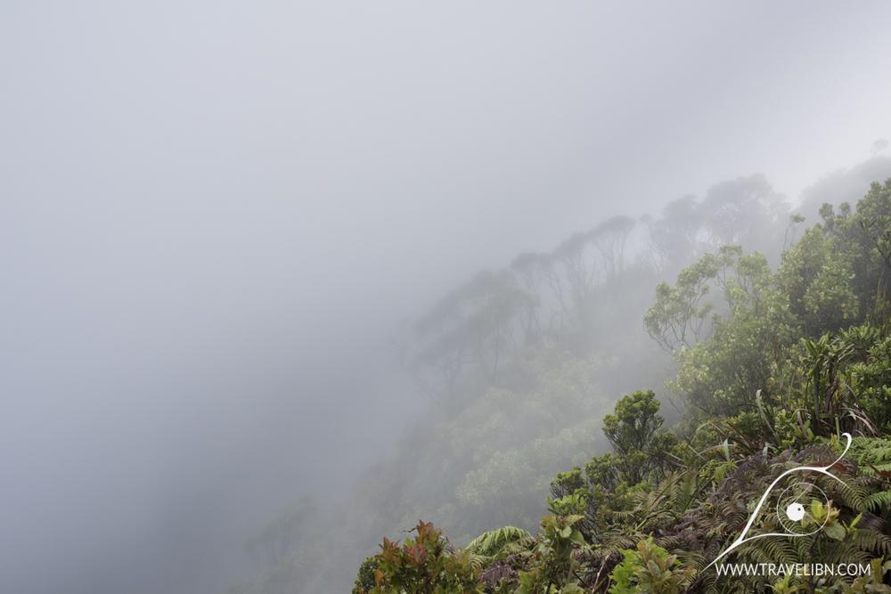 Kilohana Vista Alakai Swamp Trail
