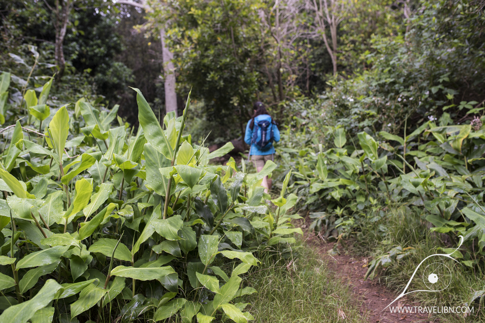 nuaolo valley hike jungle.jpg