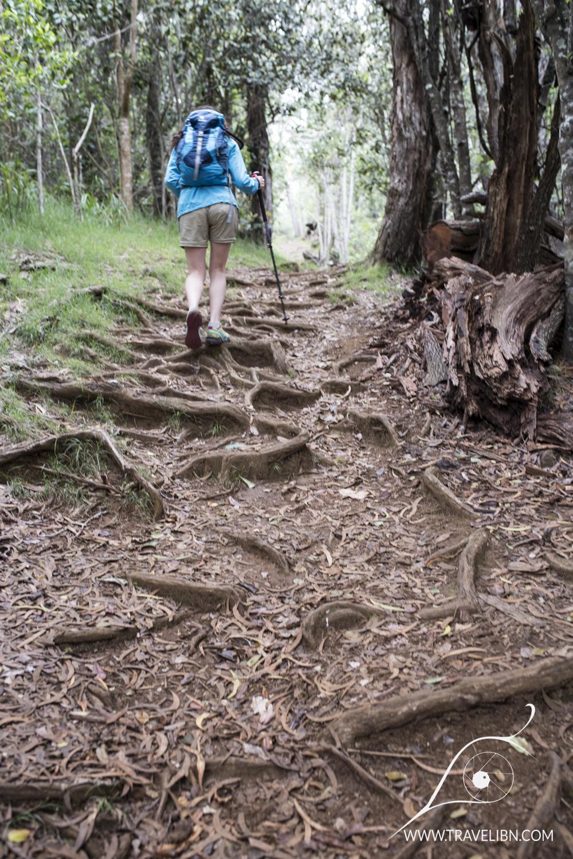 nuaolo valley trail.jpg