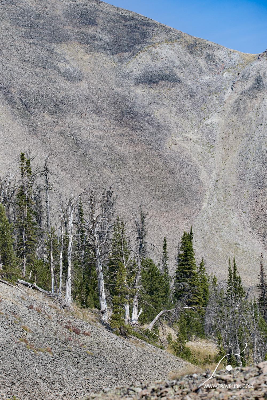 avalanche peak trail-14.jpg