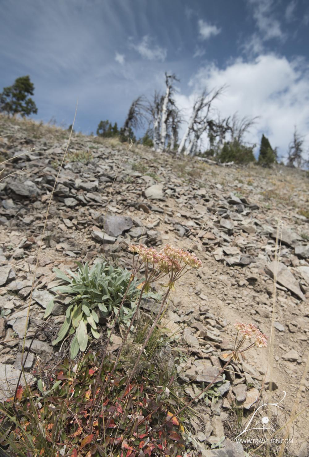 avalanche peak trail-36.jpg