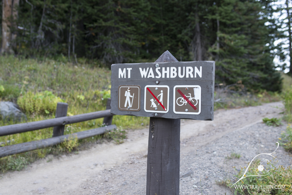Mt. Washburn South trailhead