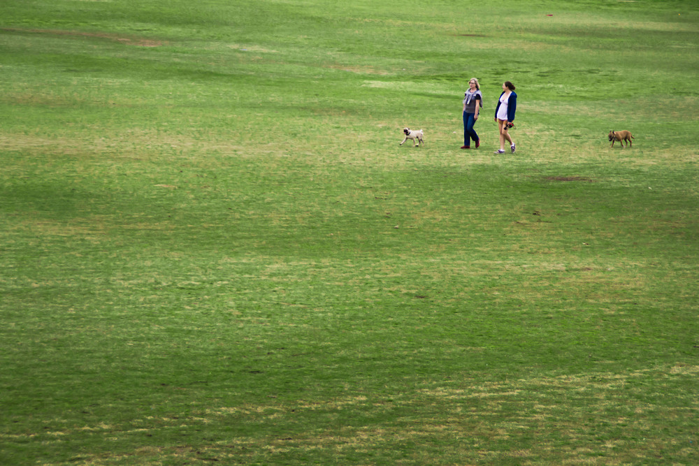 Two women and their dogs stroll through the lush green field at Zilker Park, taking advantage of the spring weather.
