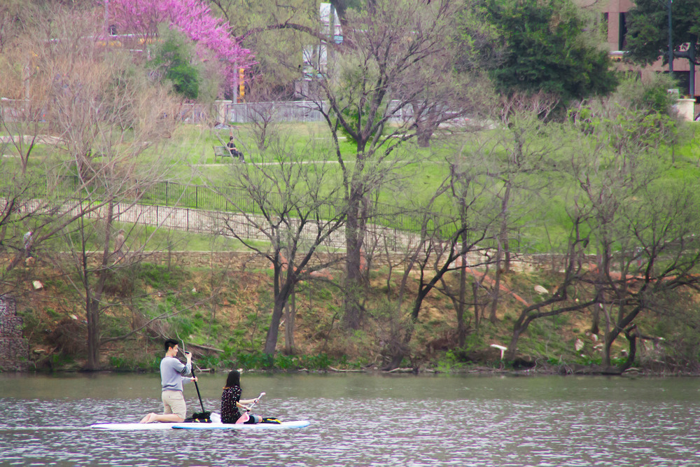 A couple paddle boards on Town Lake, sailing past an onlooker on the bank. Colorful trees peek out from the background as spring blossoms bloom.