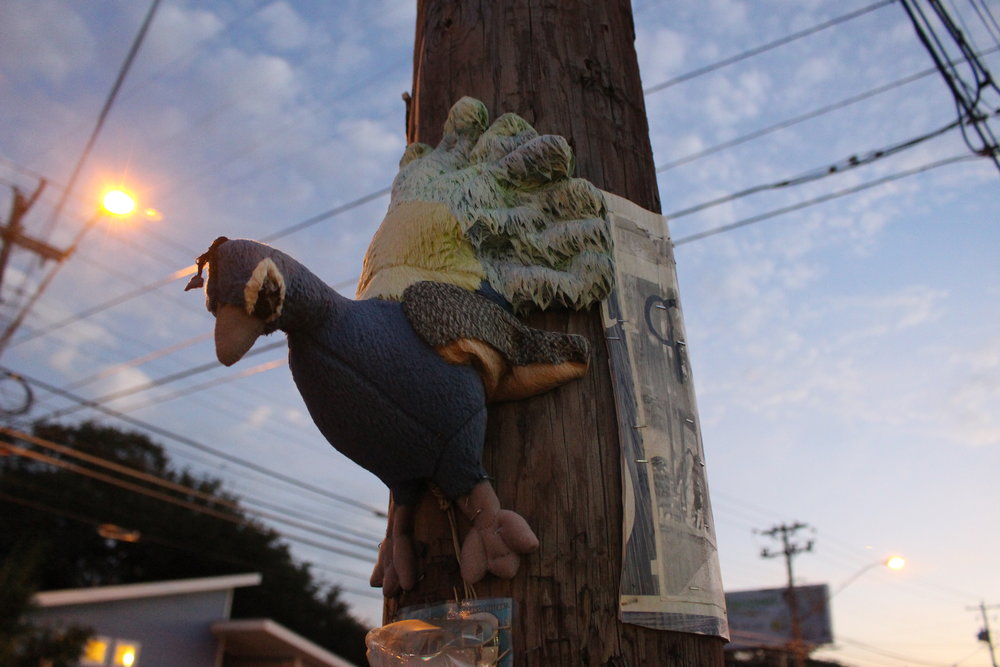 As the sun sets, a stuffed animal peacock stapled to a telephone pole is in view.