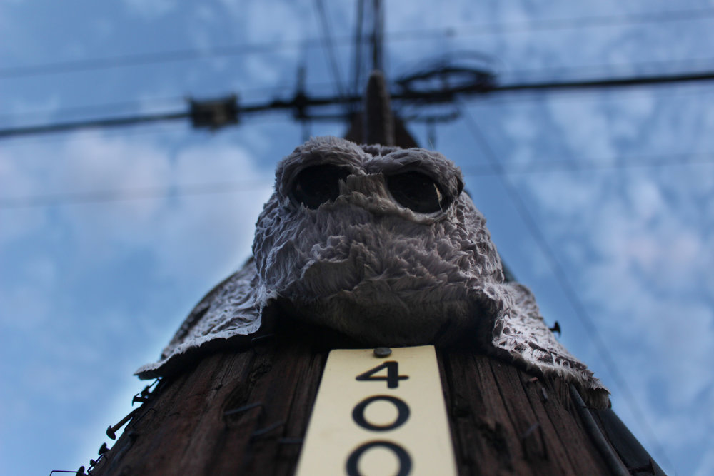 A stuffed animal stingray is stapled to a telephone pole on South First Street.