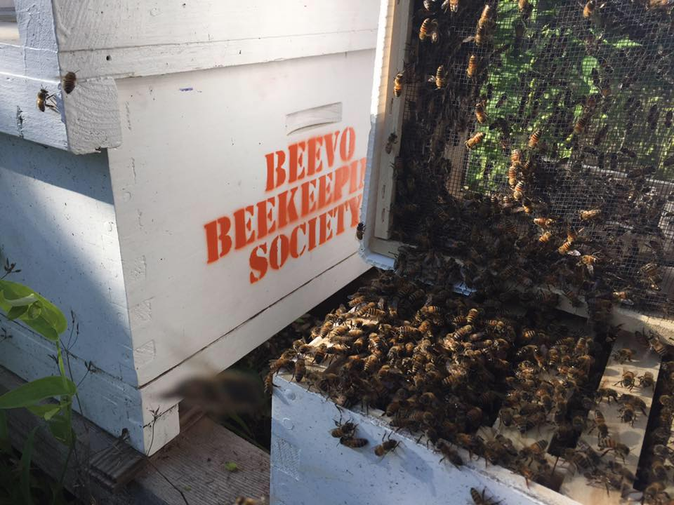 Photo courtesy of BEEVO Beekeeping Society