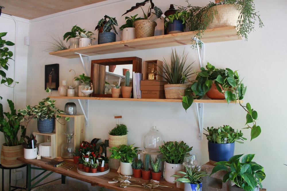 Sara Cecilia Barnes, the owner of the Frond Plant Shop, features many of her plants in stylish planters to add to a rustic and warm setting.