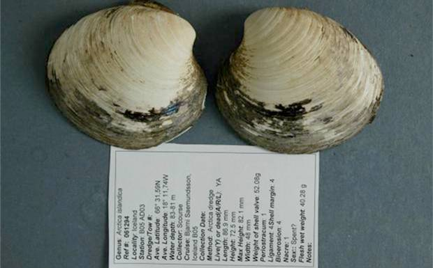 World's oldest animal? Read up on the calamity of  Ming the clam .  5th grade +