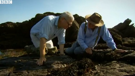 Remarkable Lives of Limpets  (3:38) Learn more from the experts about the incredible life of these single-shelled organisms that inhabit the intertidal zone.