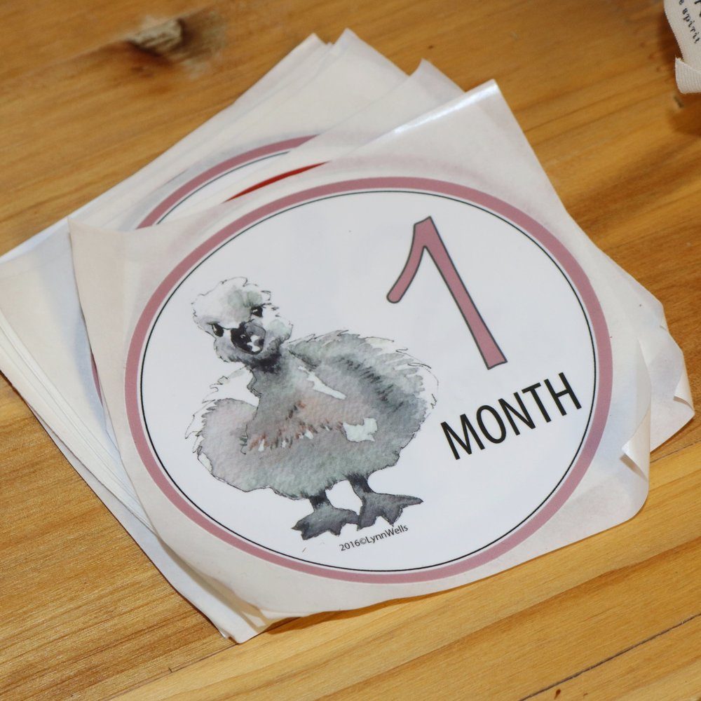 Baby's 1st Year/Month Stickers