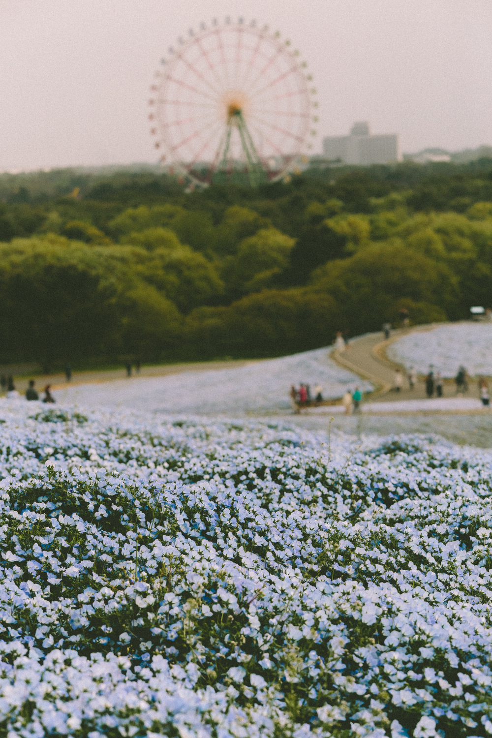 Hitachi Seaside Park- Nicole Knox