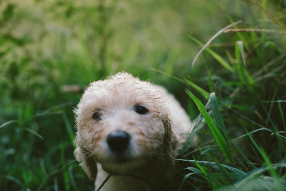 Puppies-Aug24-6443.jpg