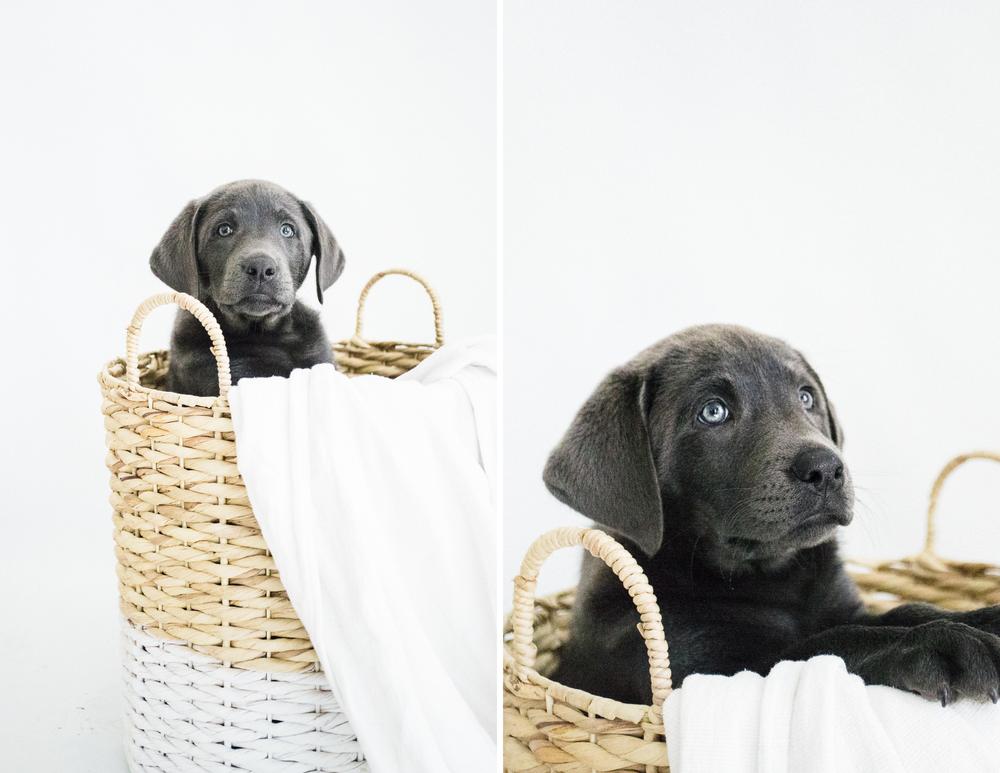 PuppiesBlog-2.jpg