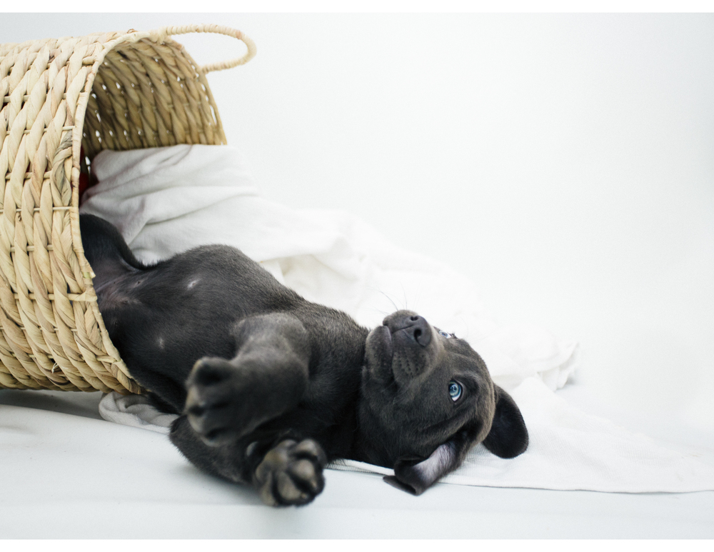 PuppiesBlog-4-2.jpg